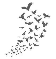 silhouette of flying birds on white background vector image
