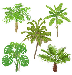 Tropical plants isolated vector