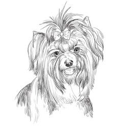 biewer terrier hand drawing portrait vector image