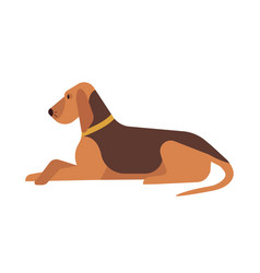 cute funny lovely dog lying and resting on floor vector image