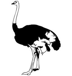 Ostrich vector