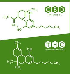 thc and cbd formula cannabidiol and vector image