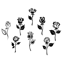 Beautiful roses silhouettes vector image vector image
