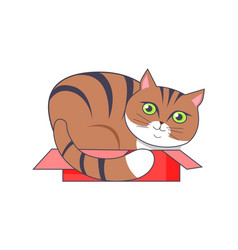 cat sitting in box red color vector image