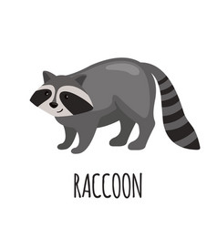 cute raccoon in flat style vector image vector image
