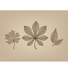 Autumn leaves lace vector