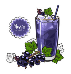black currant smoothie - summer cool drink with vector image