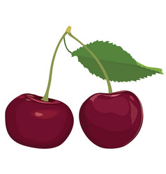 cherries isolated cherry fruit set ripe sweet vector image