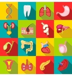 Internal organs icons set flat style vector image