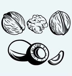 Coconut and walnut vector image vector image