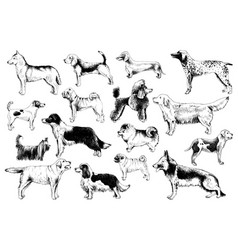 breeds dogs vector image