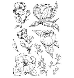 collection hand drawn peony flowers and plants vector image