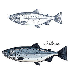 Salmon fish isolated sketch icon vector