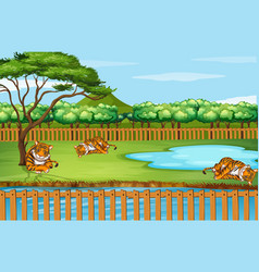 scene with tigers at zoo vector image