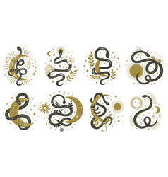 mystical snakes floral boho and astrology vector image
