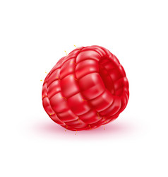 Realistic fresh raspberry red fruit a vector