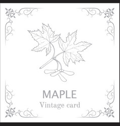 maple branch with leaves and seeds vintage card vector image vector image