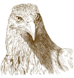 engraving of big eagle head vector image vector image