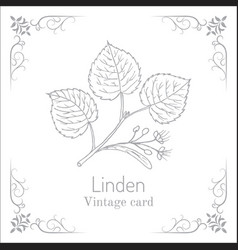 linden branch with leaves and flowers vintage vector image