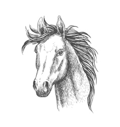 Mare horse sketch for equestrian sport design vector image