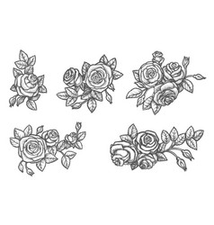 set isolated rose flower sketch plant drawing vector image