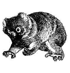 Koala vintage vector