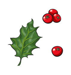 mistletoe leave and red berries holly berry vector image