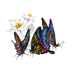 Watercolor butterflies set isolated on white vector
