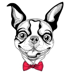 funny cartoon hipster Boston Terrier breed smiling vector image vector image