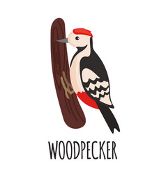 cute woodpecker in flat style vector image vector image