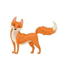 flat design of standing lovely red fox with vector image