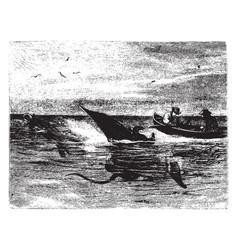 Manta ray vintage vector