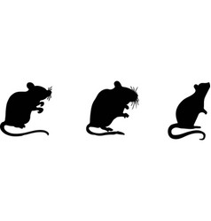Rat icon isolated on background vector