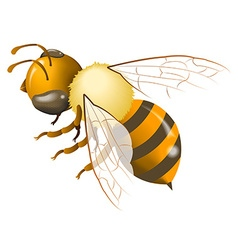 Bee gradient mesh vector