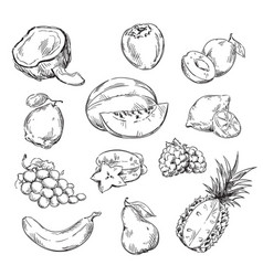 Drawing of various fruits vector