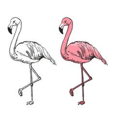 Flamingo sketch black and vector