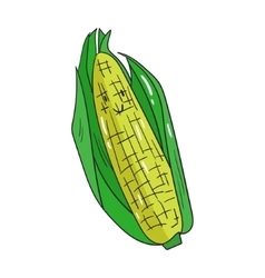 Fruit corn vector
