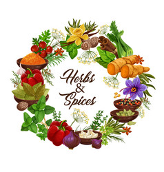 Herbs and spices seasonings and condiments vector