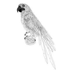 line art parrots vector image
