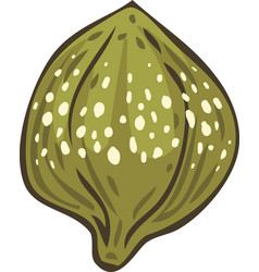 Salted and pickled caper bud vector