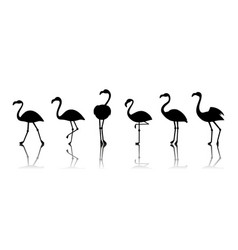 black flamingo silhouettes isolated on vector image