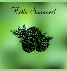 hand drawn summer background vector image