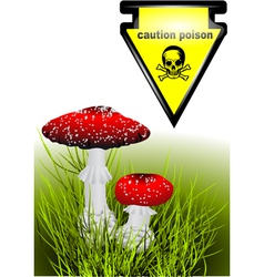 Poisonous mushrooms vector