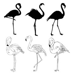 With set of seven flamingo silhouettes isolated vector