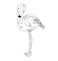flamingo doodle style isolated on white vector image vector image
