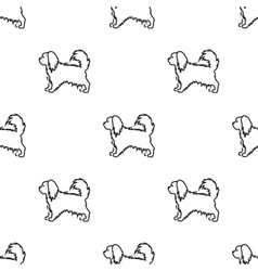 Pekingese icon in black style for web vector image