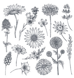 Collection hand drawn flowers and plants vector