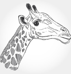 giraffe isolated black contour on white background vector image