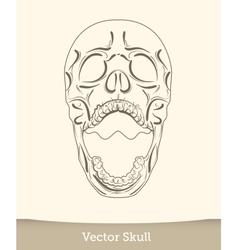 skull isolated on white background vector image