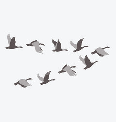 A flock ducks a cartoon flock birds vector